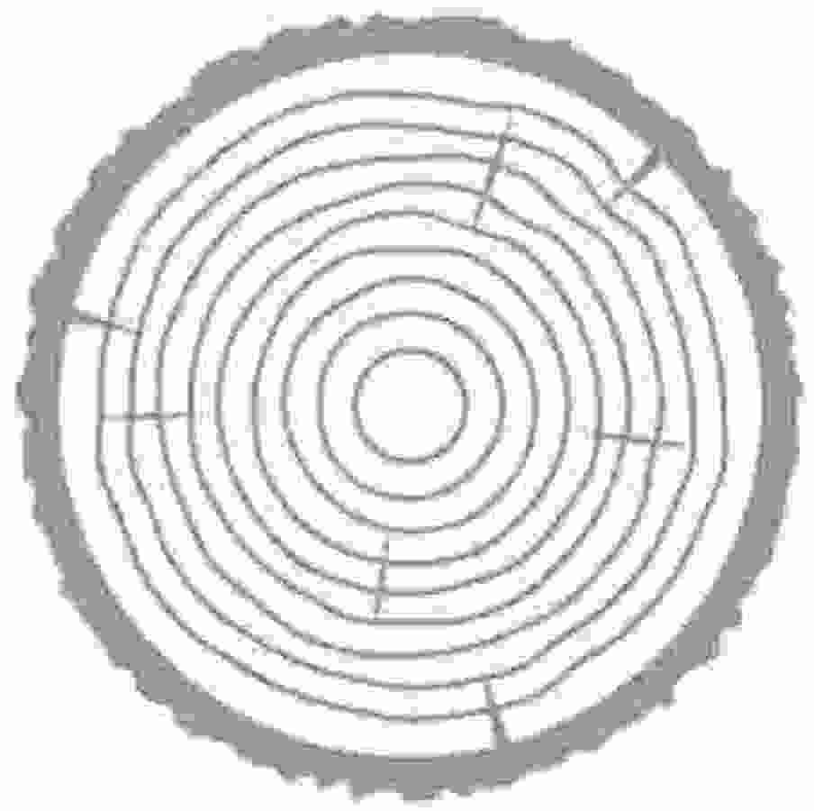 Pełen rdzeń wykonany z wysokogatunkowego drewna topoli zapewniający odpowiedni pop i flex oraz wysoką trwałość.